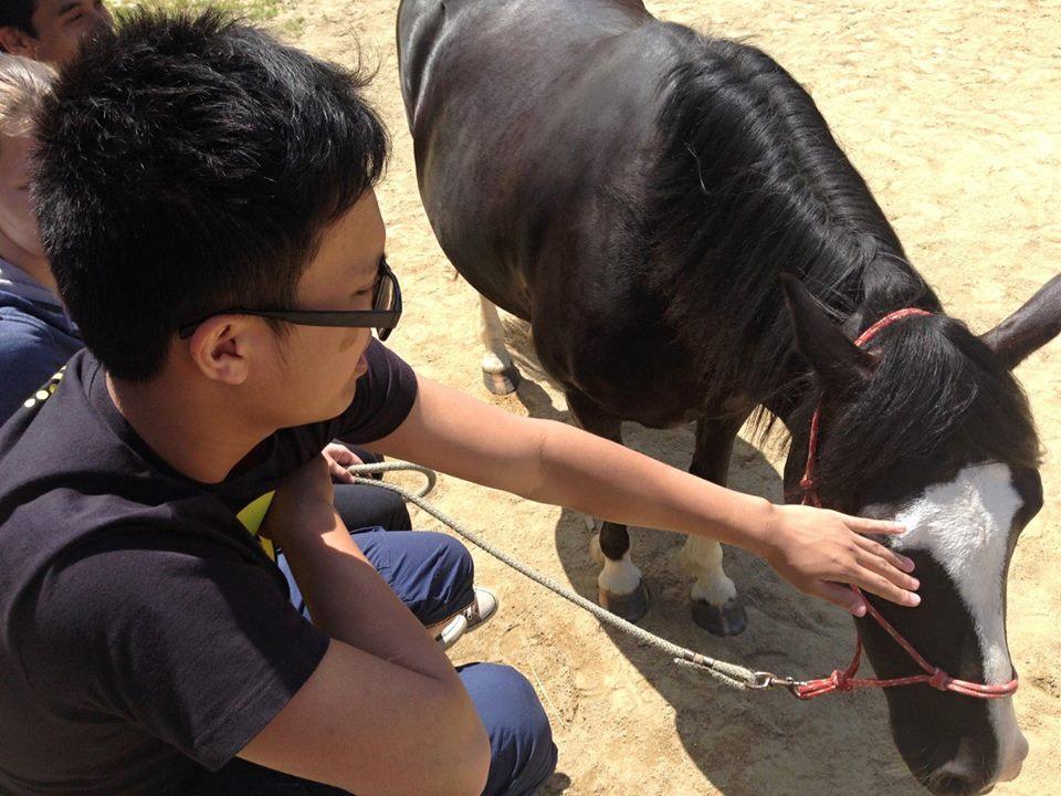 Workcamp s koňmi v Ryzáčku