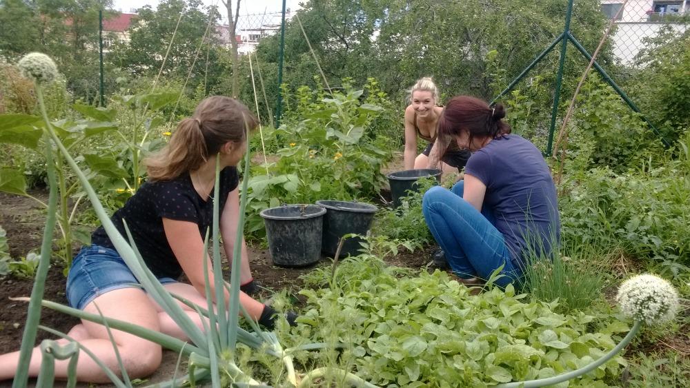 Jeden den vpražské komunitní zahradě Kotlaska